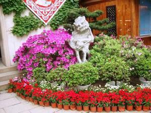 Виды цветов для клумбы своими руками
