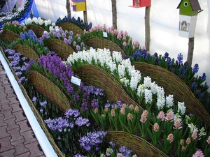 Садовые клумбы своими руками фото фото 718