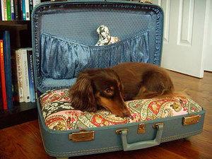 Домик для собаки из чемодана