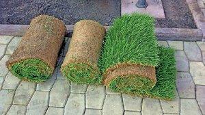 Состав рулонных газонов