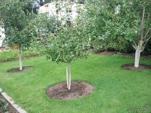 Как посадить плодовые деревья на участке схема