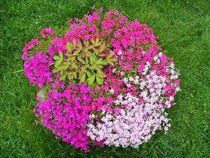 Многолетники и нискорослые цветы