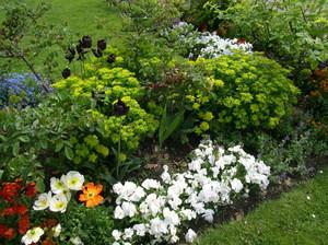 Разновидности многолетних растений