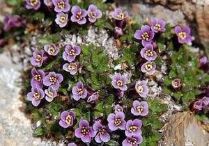 Низкорослые многолетние растения