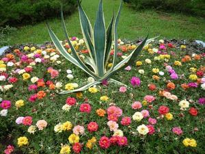 Высадка цветов на клумбу