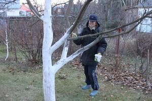 Побелка деревьев осенью состав