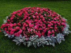 Какие есть цветы не высокие фото