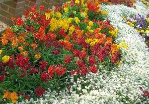 Цветы на клумбе фото и название