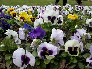 растения для клумбы фото и названия