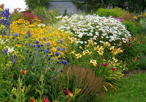 цветы для клумбы высокие фото с названиями