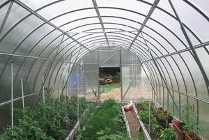 Советы по посадке овощей, цветов и фруктов