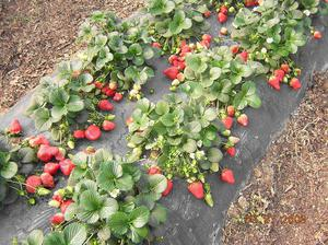 Как растут овощи в теплице