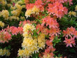 кустарники цветущие все лето фото и название