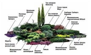 Какие выбрать растения для альпийской горки