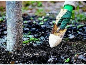 подкормка кустов осенью удобрениями