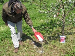 когда осенью подкармливать плодовые деревья