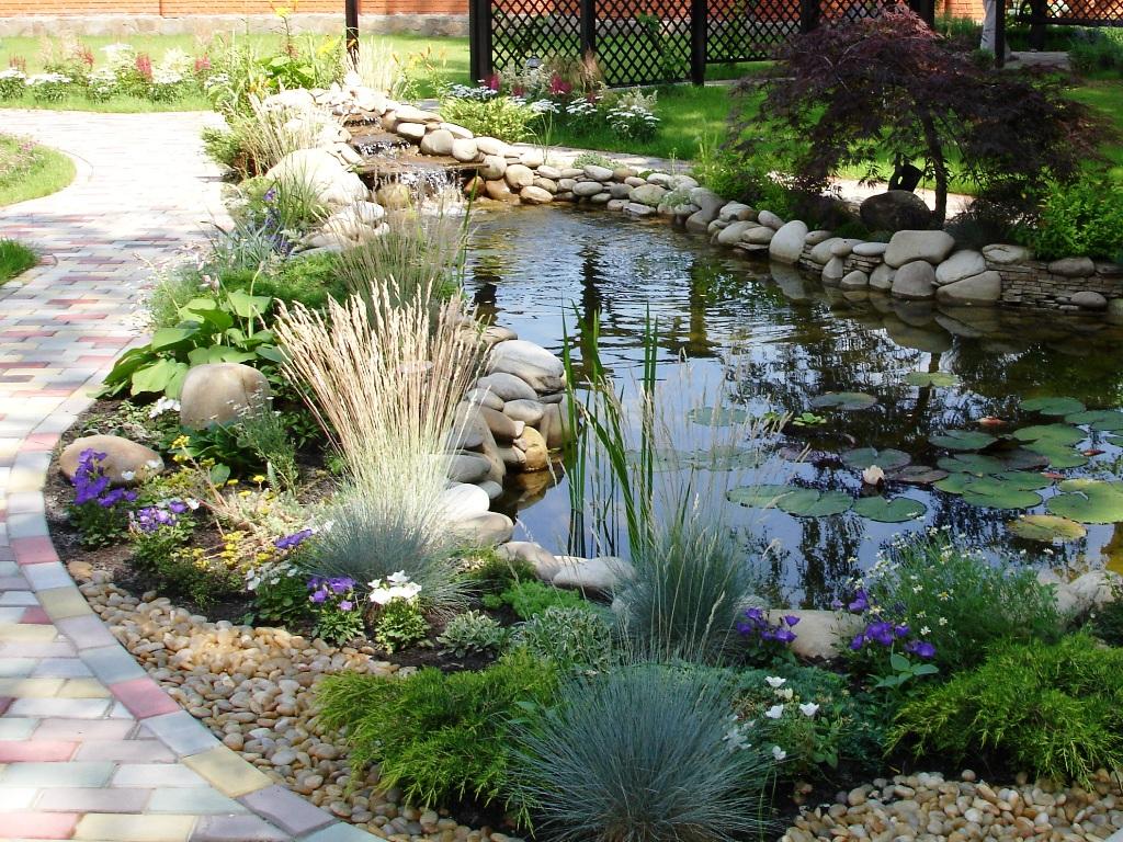 Выбор водных растений для садового пруда и уход за ними. Виды и правила ухода