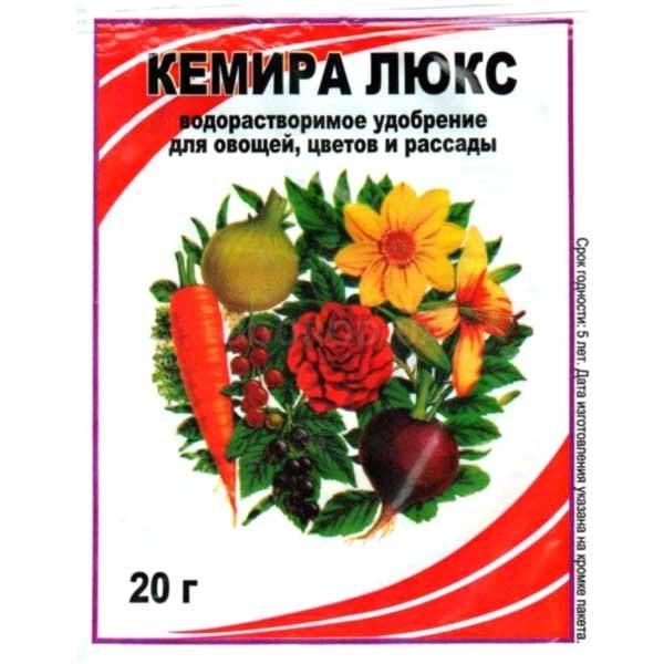 Гибискус — цветок смерти, приметы и суеверия, посадка и уход