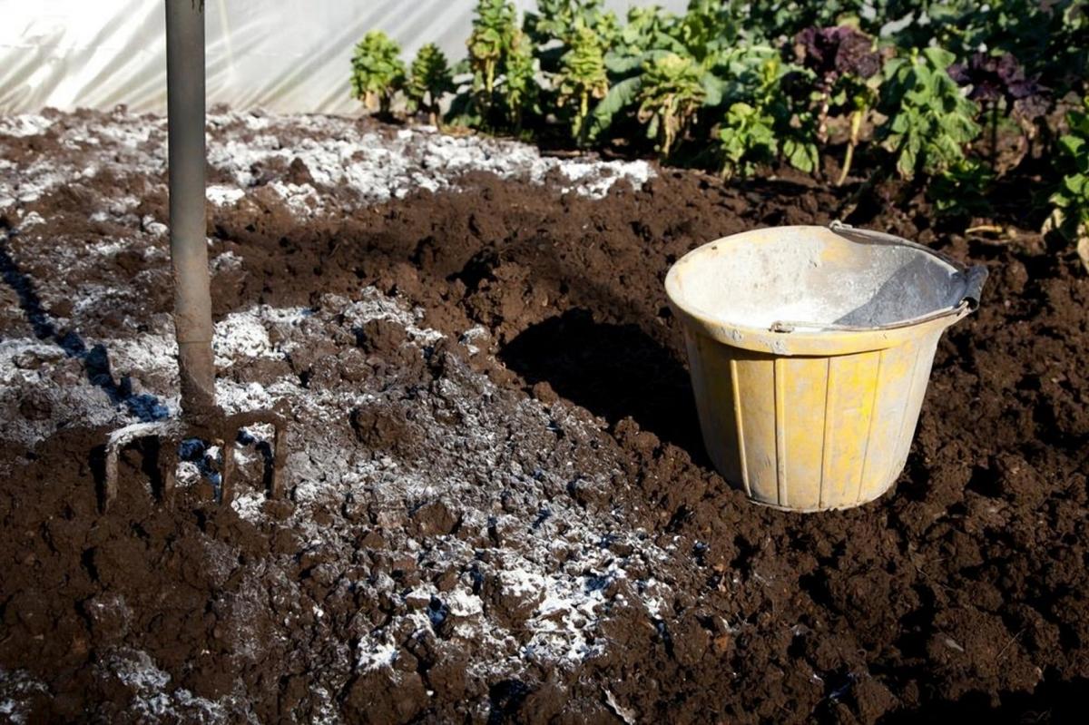 Какие виды почв требуют известкования, как его проводить