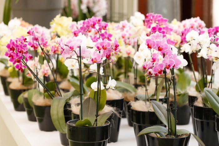 8 ошибок в уходе за орхидеей, которые очень быстро загубят цветок