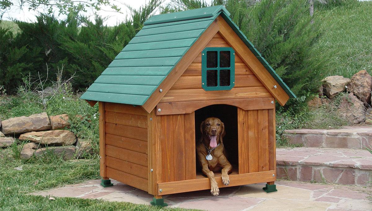 Будки для собак: фото и технология сооружения