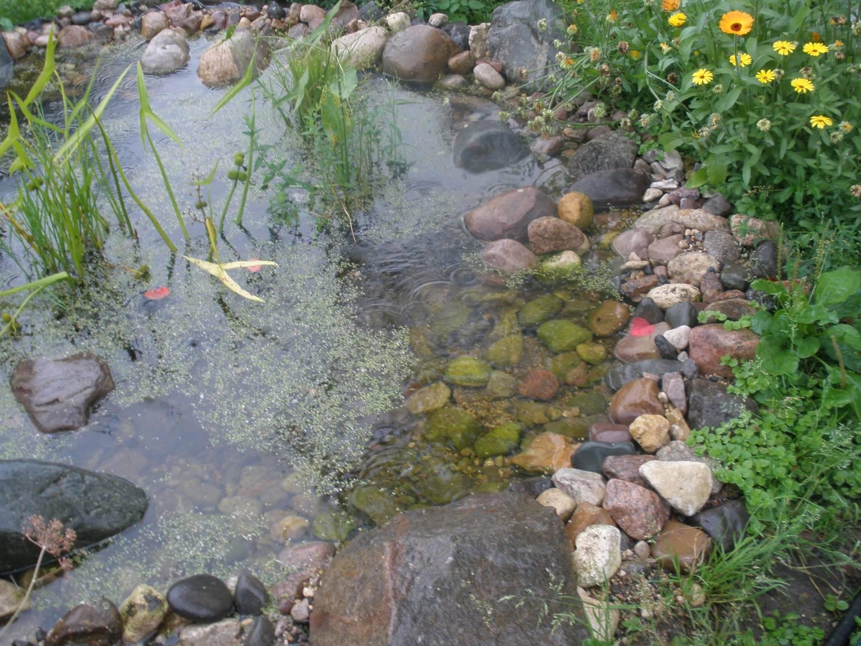 Особенности построения пруда для разведения рыбы на даче