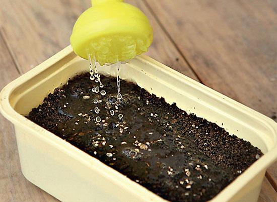 Ёмкость с почвой