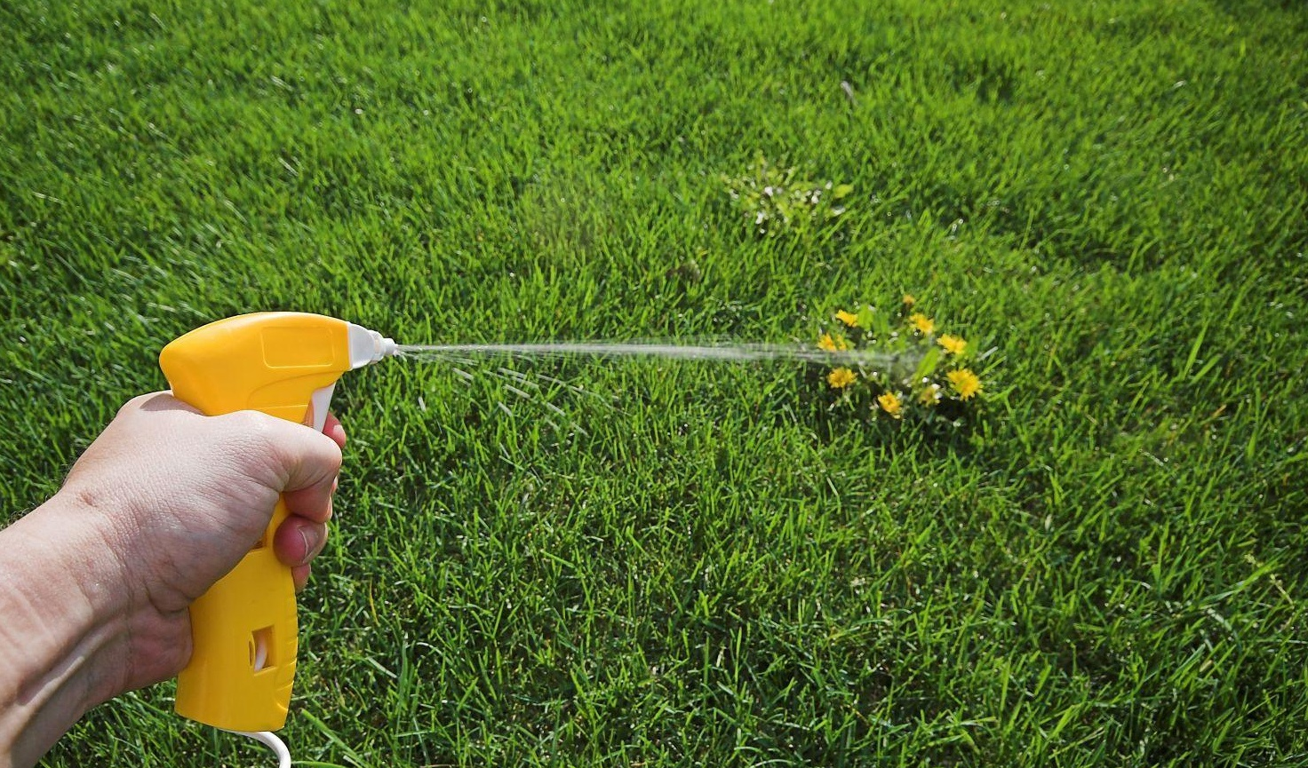 Выбор гербицидов для борьбы с сорняками