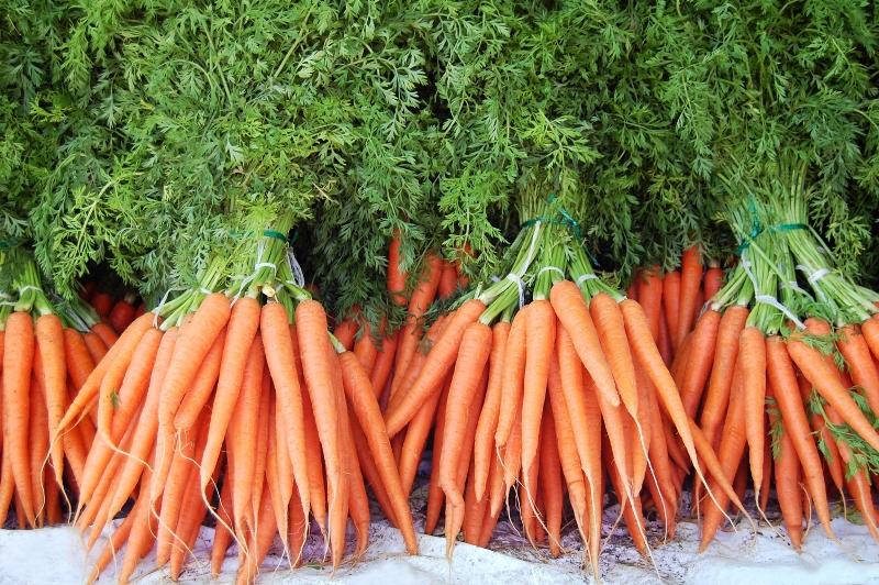 Как поступить с урожаем моркови, в которой завелась морковная муха