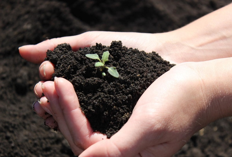4 легких способа помочь почве на огороде, которая устала