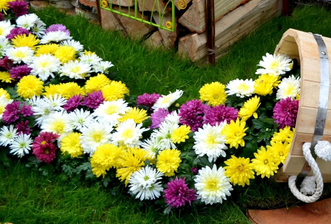 6 красивых цветов, которые можно посадить под зиму