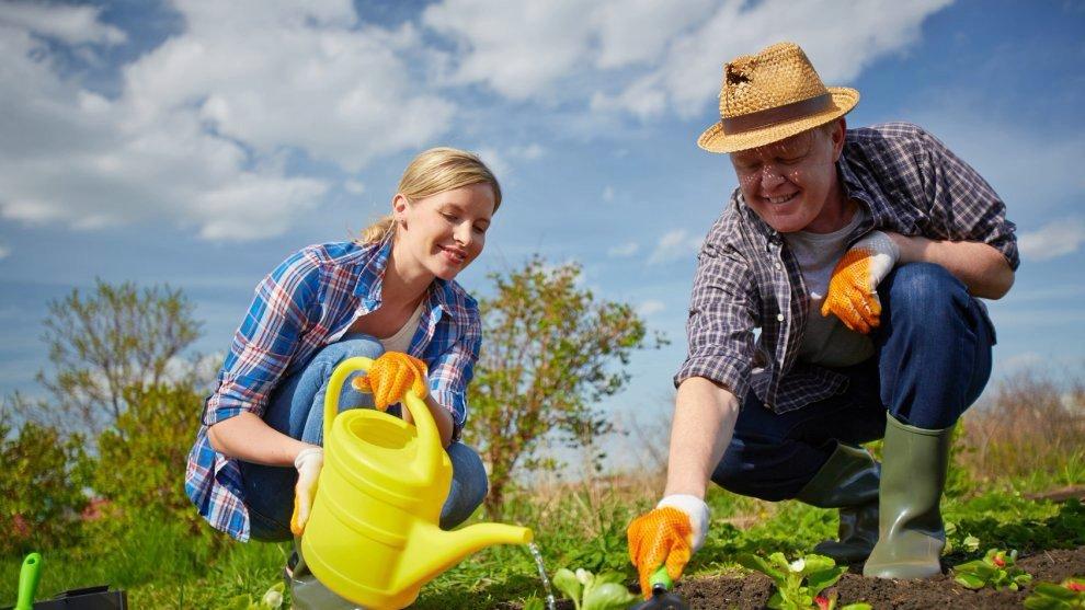 6 способов применения перекиси водорода для здоровья растений