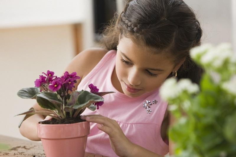 Как устранить плесень в цветочных горшках
