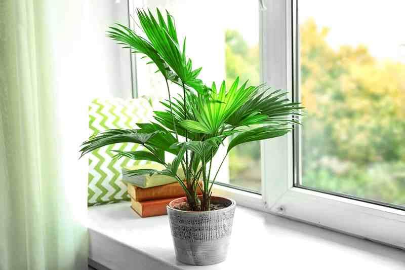 """9 """"капризных"""" растений, которые могут привлечь негативную энергетику"""