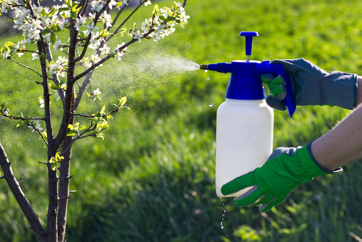 Как выбрать эффективные биопрепараты для защиты растений
