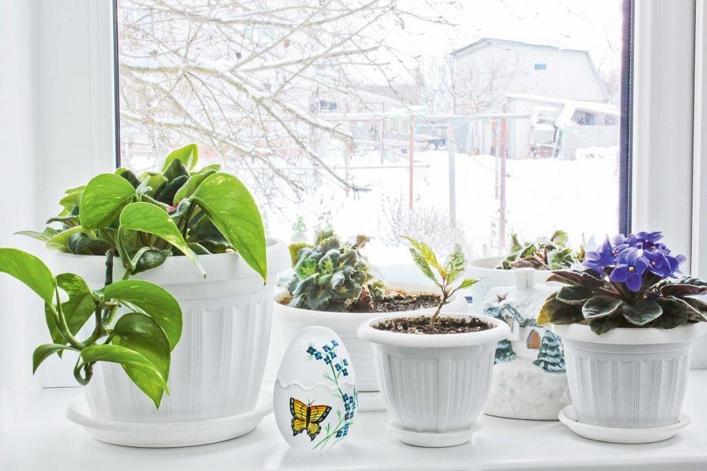 Холода близко: 5 вещей, которые обязательно нужно сделать с комнатными растениями сейчас