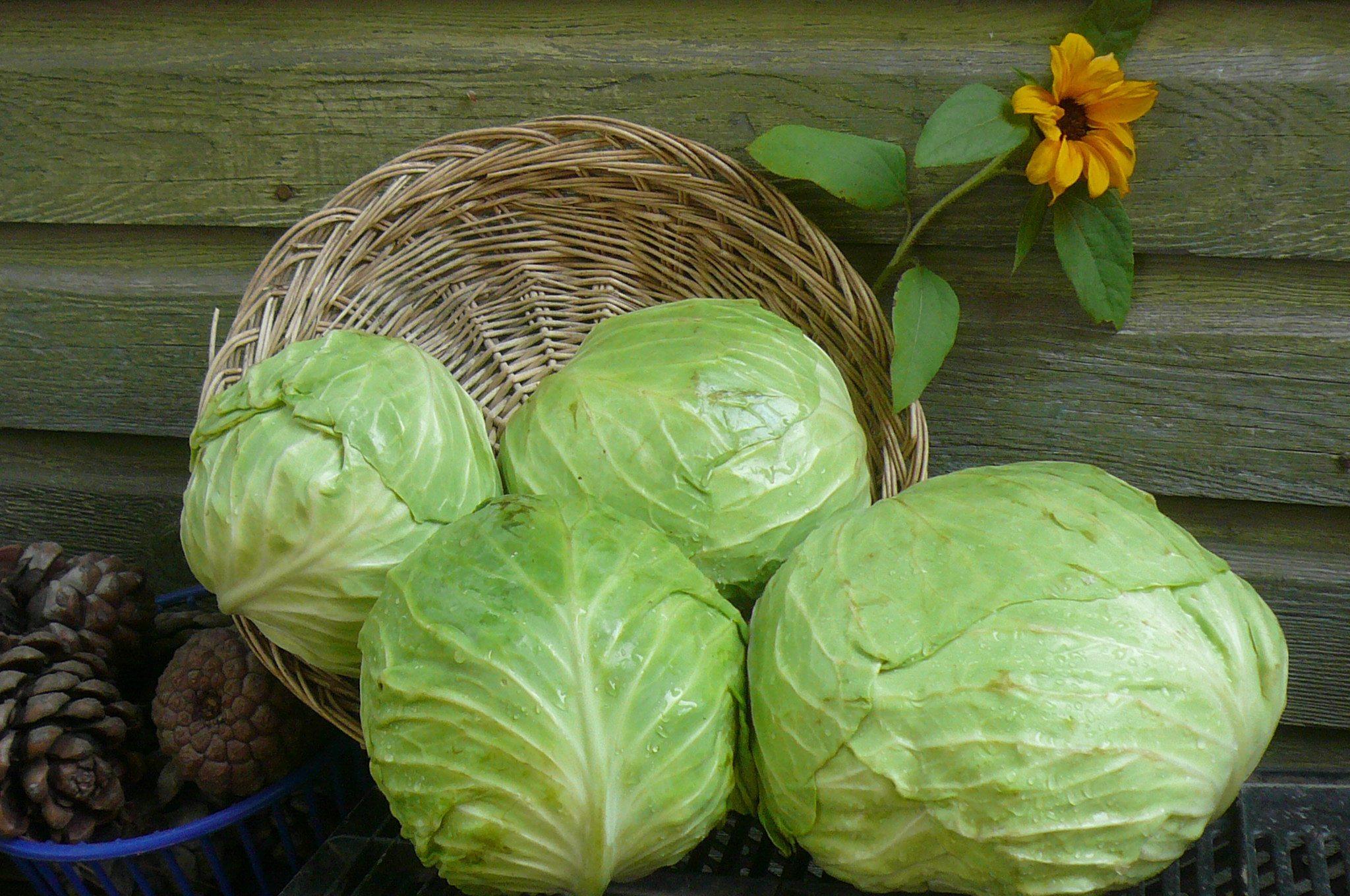 5 самых вкусных и простых салатов из капусты на зиму