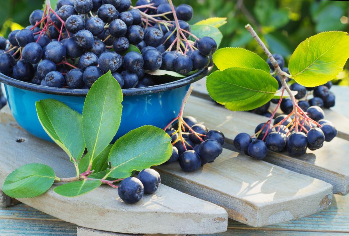 5 вкуснейших рецептов с черноплодной рябиной