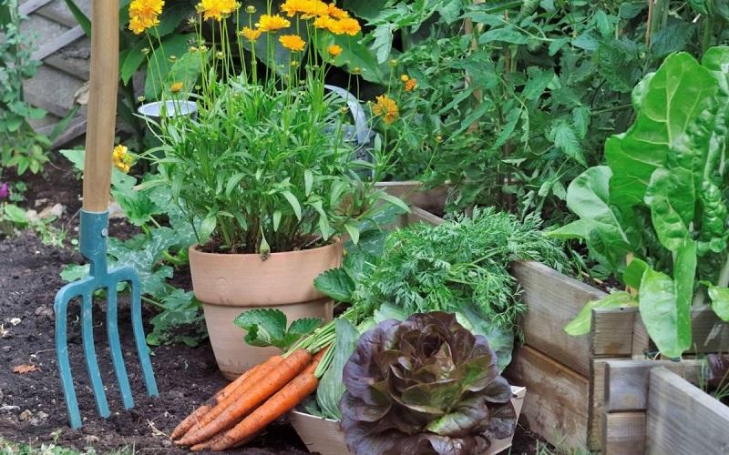 11 овощей, которые стоит посадить под осень