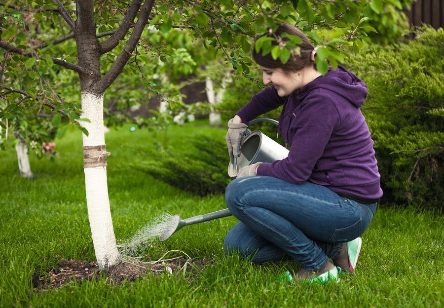 3 эффективных способа полить плодовые деревья осенью