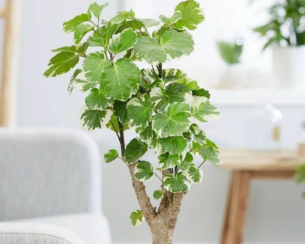 Красивые великаны: самые крупные растения для домашнего сада