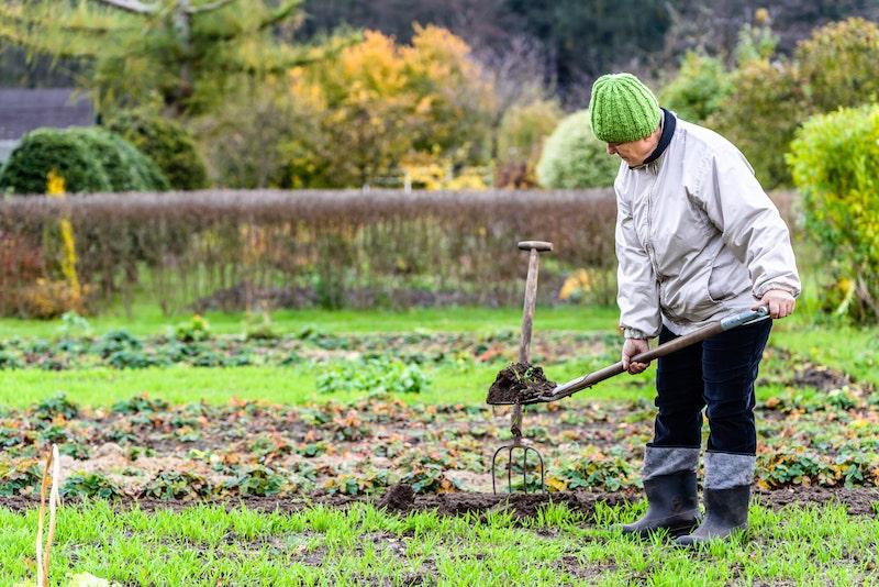 Уничтожение вредителей: как эффективно бороться с сорняками осенью