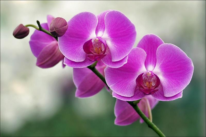 Главные вредители орхидей, о которых нужно знать каждому садовнику