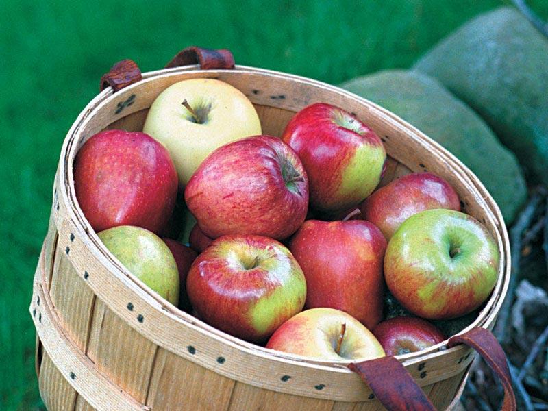 4 средства для обработки яблок, которые продлят срок хранения урожая