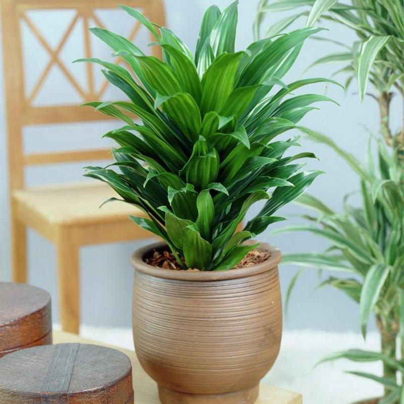 Почему нельзя игнорировать гибель домашних растений: причины, которые могут навредить человеку