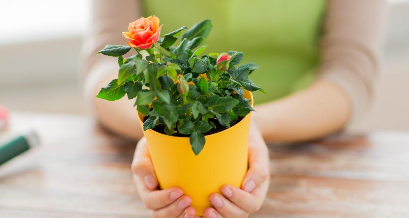 Не оценят: 5 типов людей, которым лучше не дарить цветы в горшках