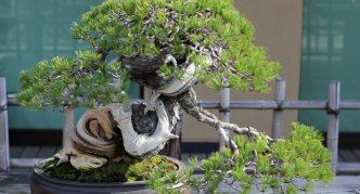Дерево с искривлённым стволом