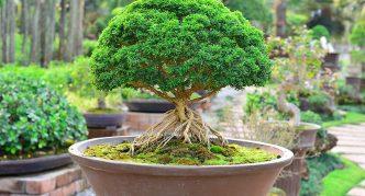 Изящное дерево в саду бонсай