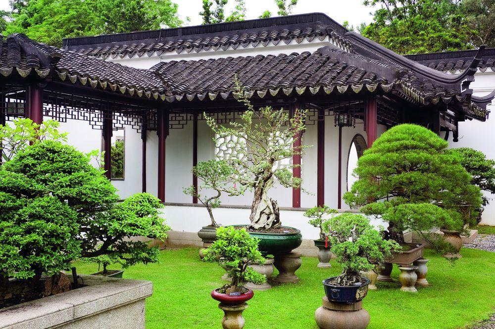 Разные варианты бонсай в саду