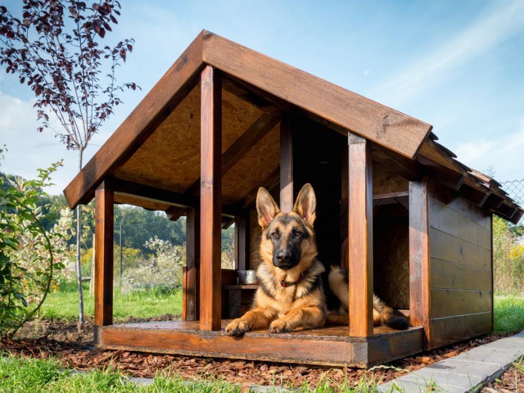 Как своими руками сделать будку для собаки по схеме